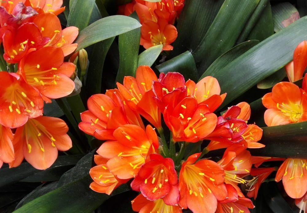 花卉日记---30_图1-9
