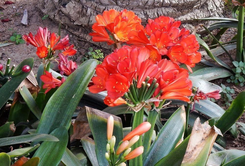 花卉日记---30_图1-10