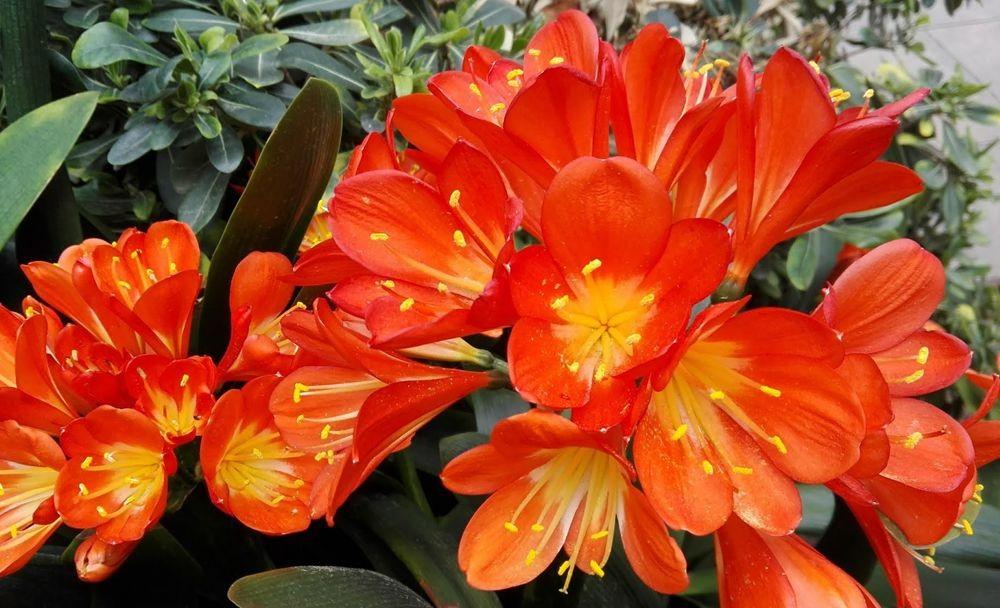花卉日记---30_图1-12