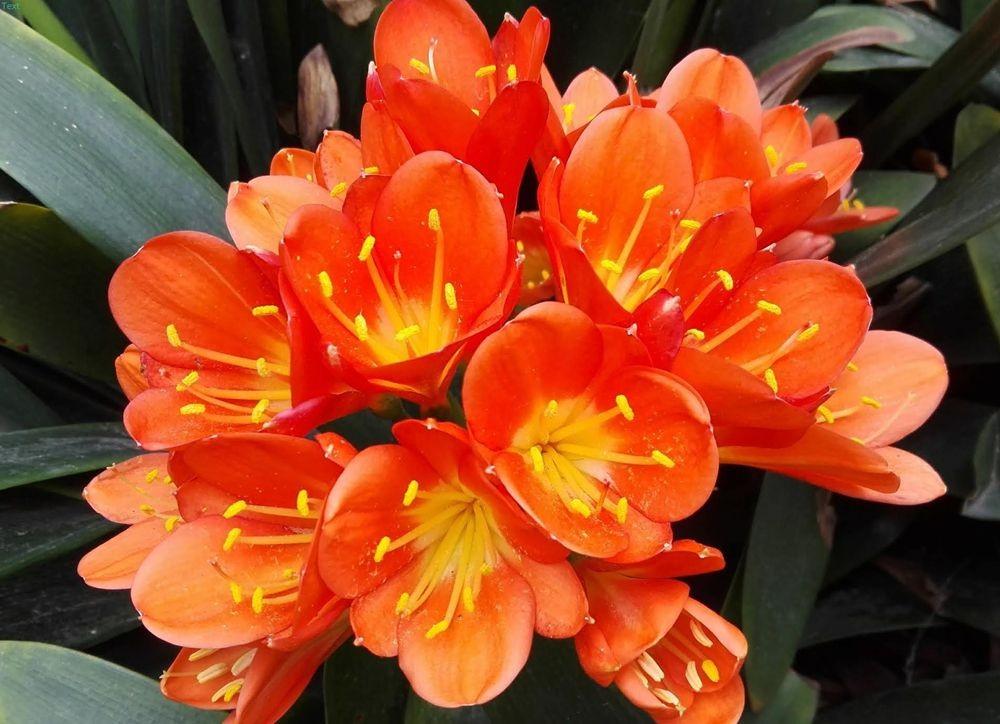 花卉日记---30_图1-13
