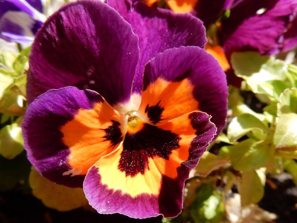 花卉日记---30_图1-14