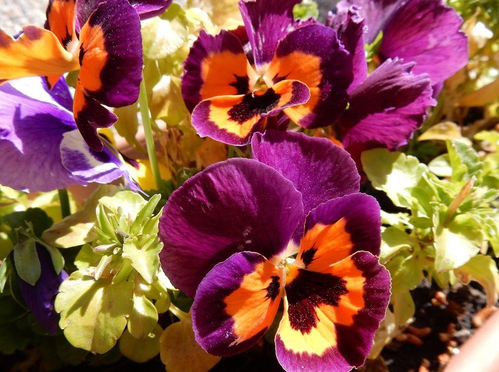 花卉日记---30_图1-15