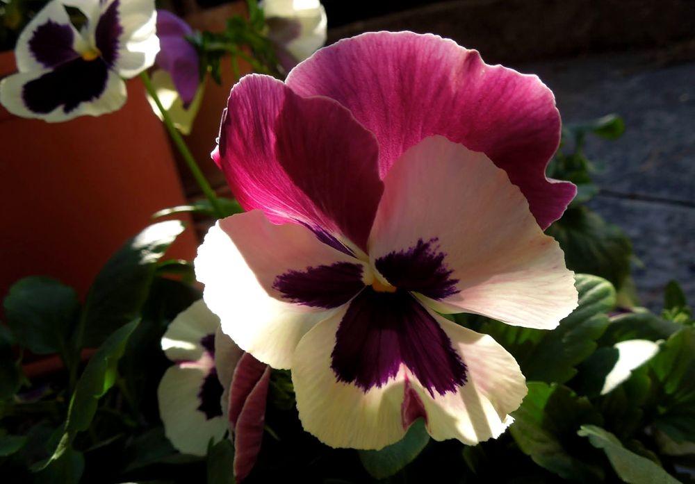 花卉日记---30_图1-16