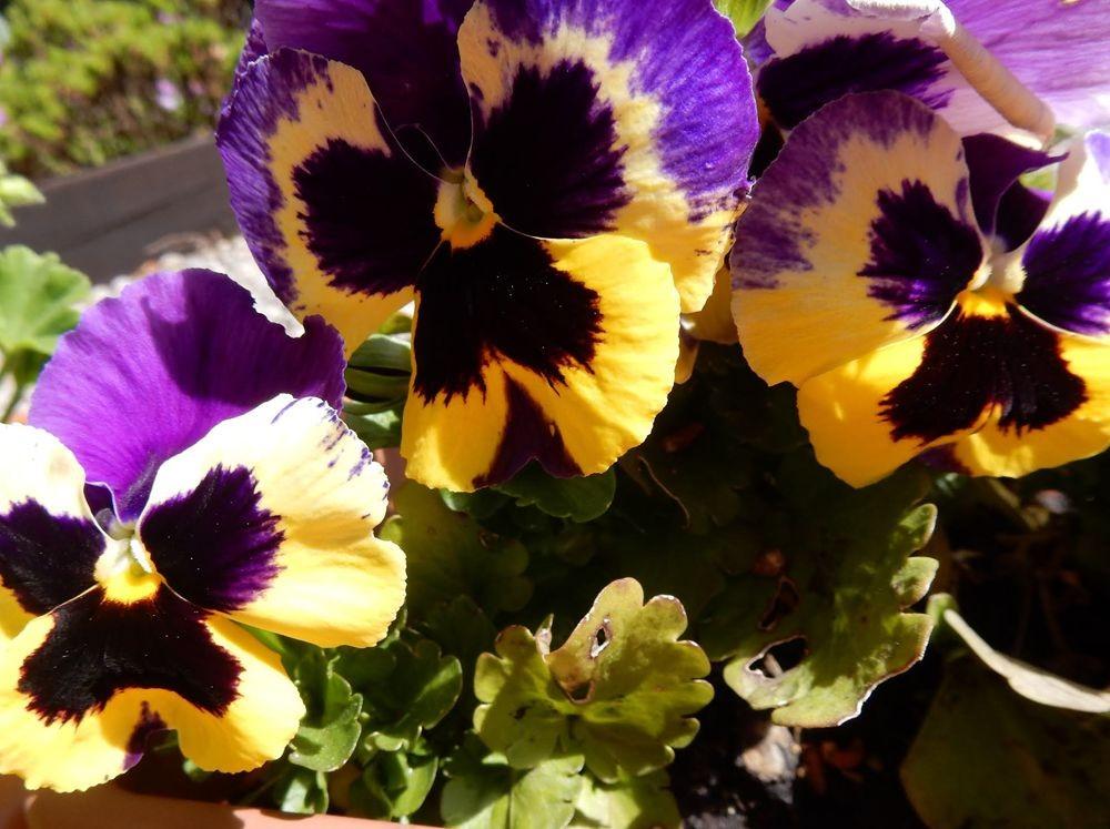 花卉日记---30_图1-17