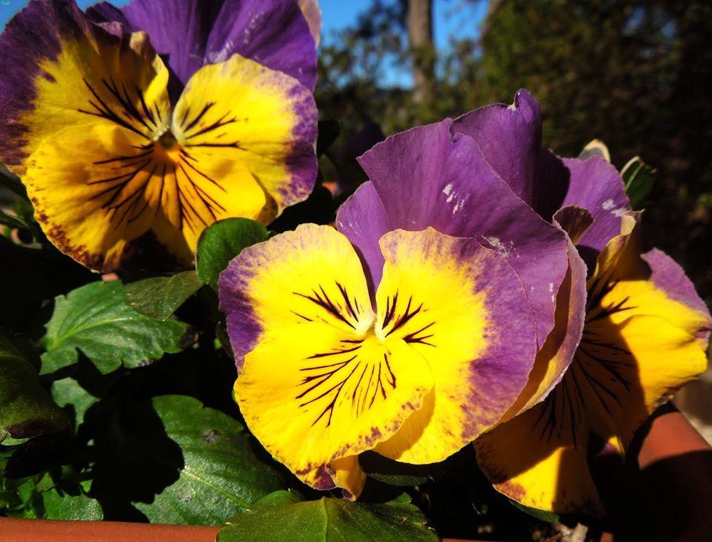 花卉日记---30_图1-18