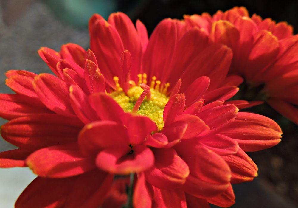花卉日记---30_图1-19