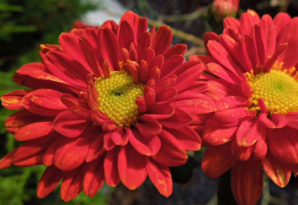 花卉日记---30_图1-20