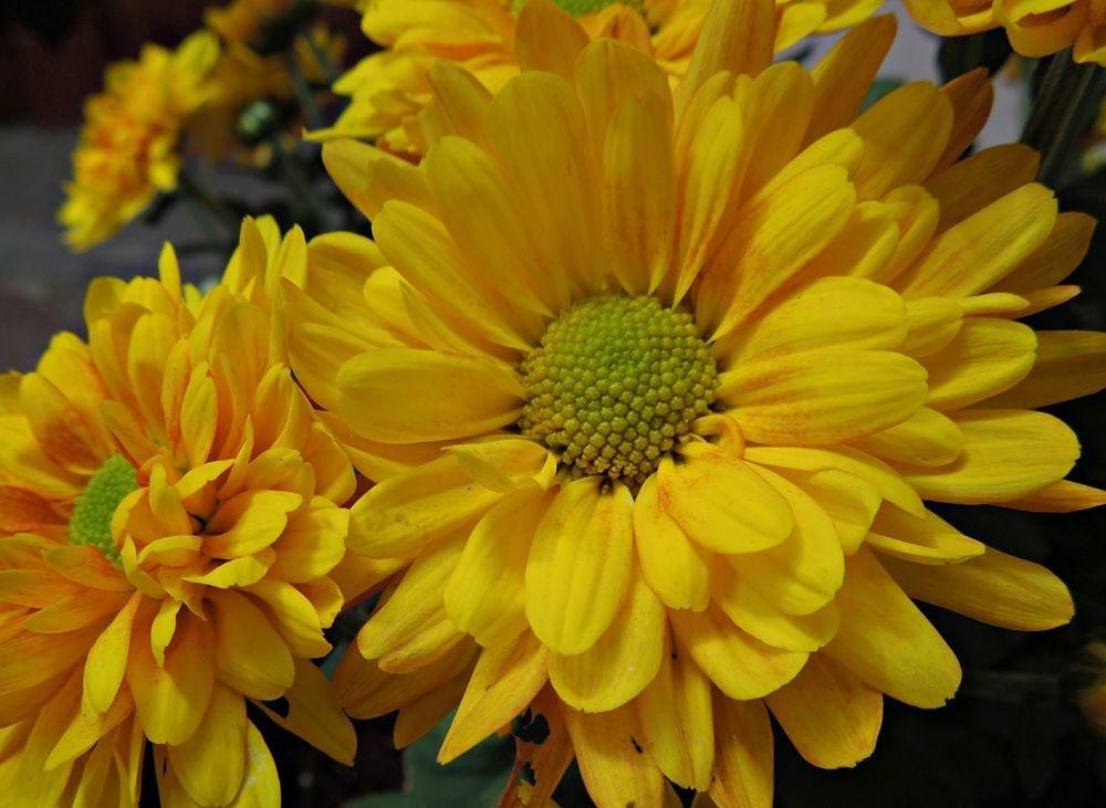 花卉日记---30_图1-21
