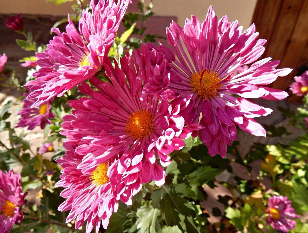 花卉日记---30_图1-22