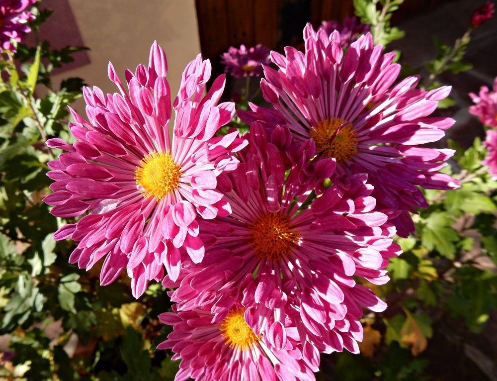 花卉日记---30_图1-23