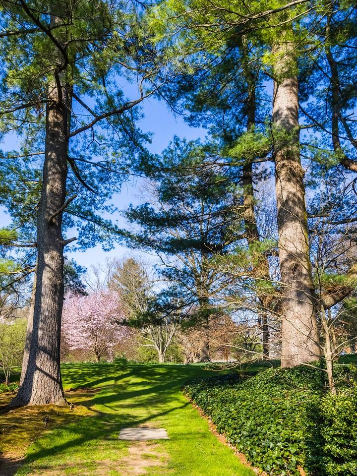 Chanticleer花园,春色乍现_图1-3
