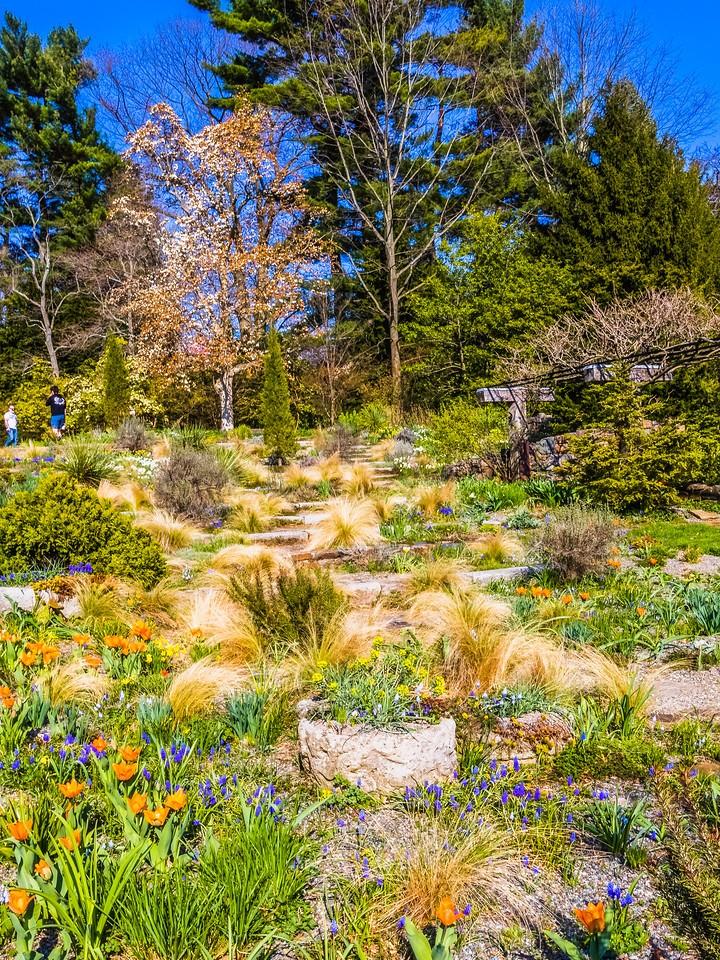Chanticleer花园,春色乍现_图1-2