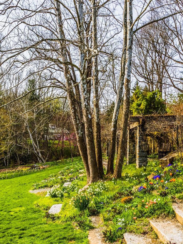 Chanticleer花园,春色乍现_图1-9