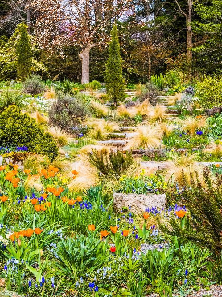 Chanticleer花园,春色乍现_图1-21