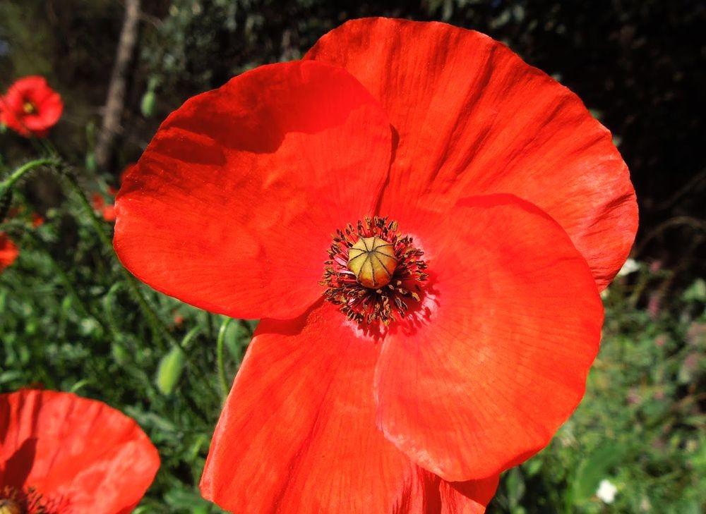 花卉日记---31_图1-1