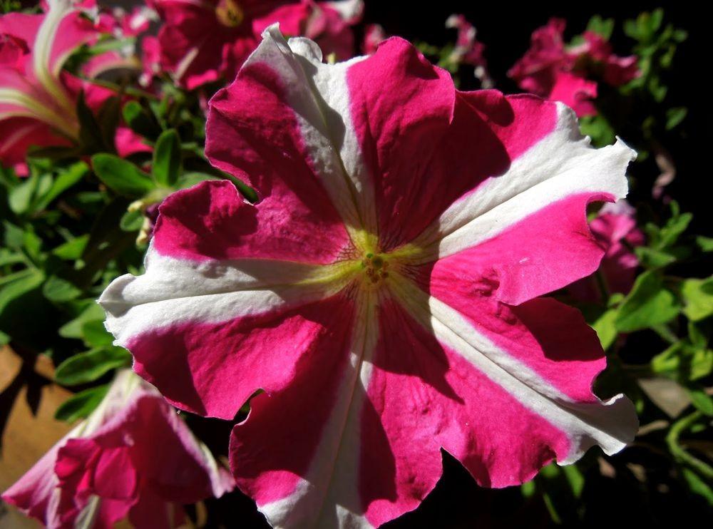 花卉日记---31_图1-2