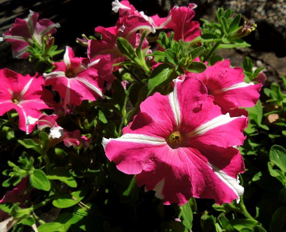 花卉日记---31_图1-3