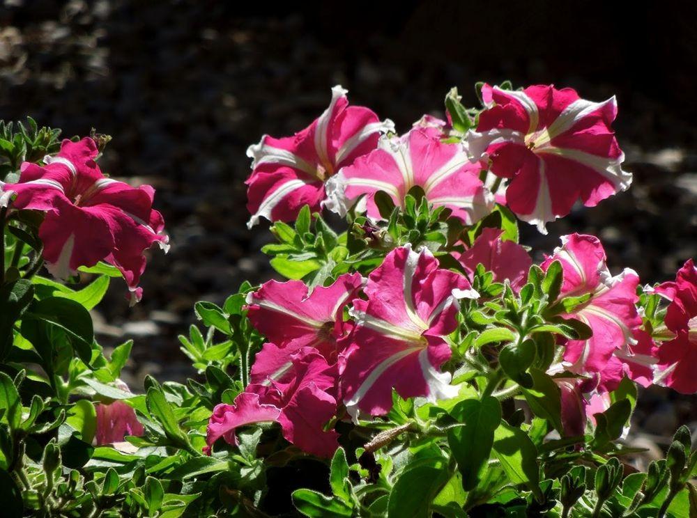 花卉日记---31_图1-4