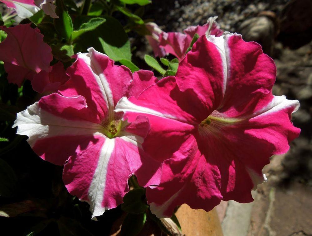 花卉日记---31_图1-5