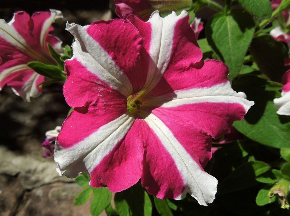 花卉日记---31_图1-6