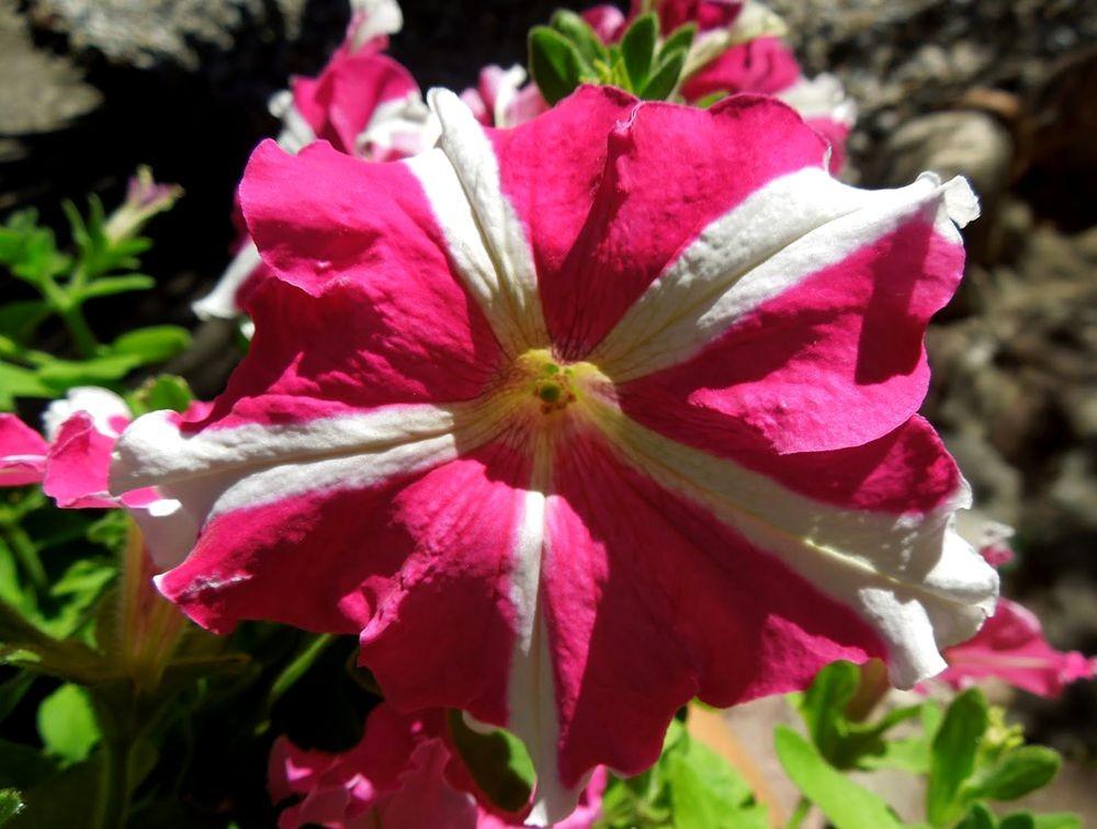 花卉日记---31_图1-7