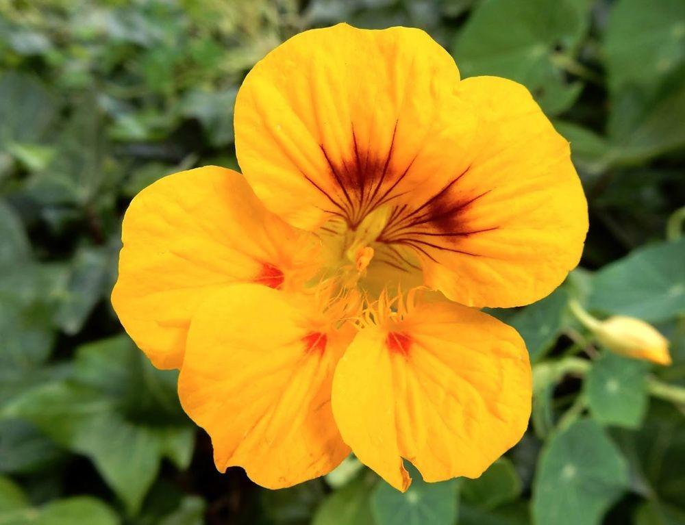 花卉日记---31_图1-8