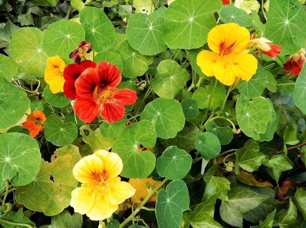 花卉日记---31_图1-9