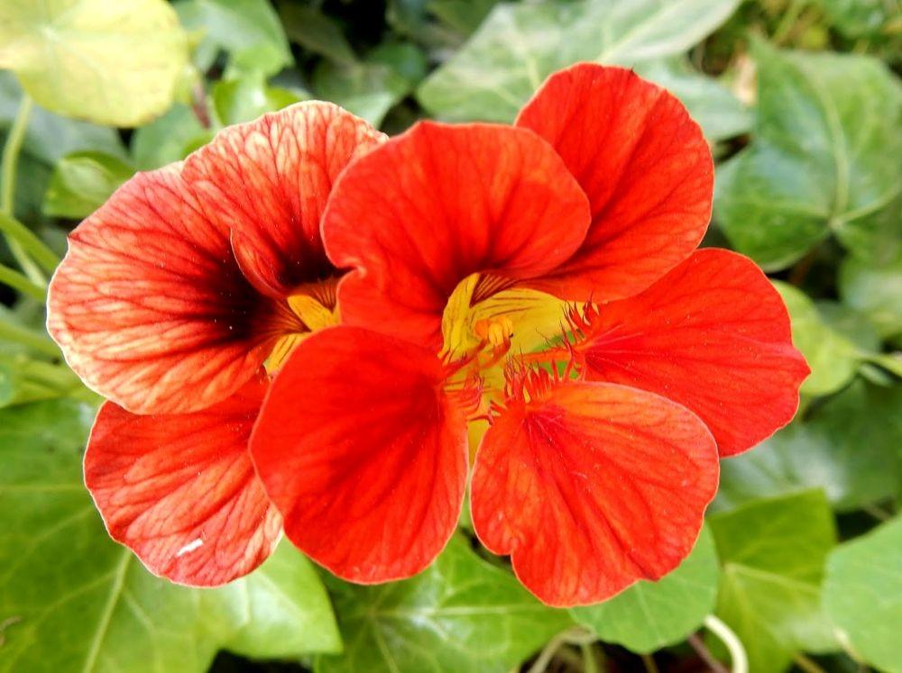 花卉日记---31_图1-11