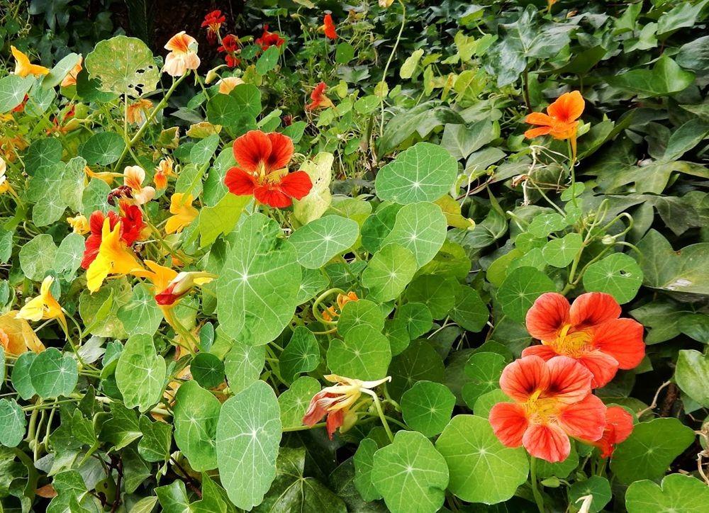 花卉日记---31_图1-12