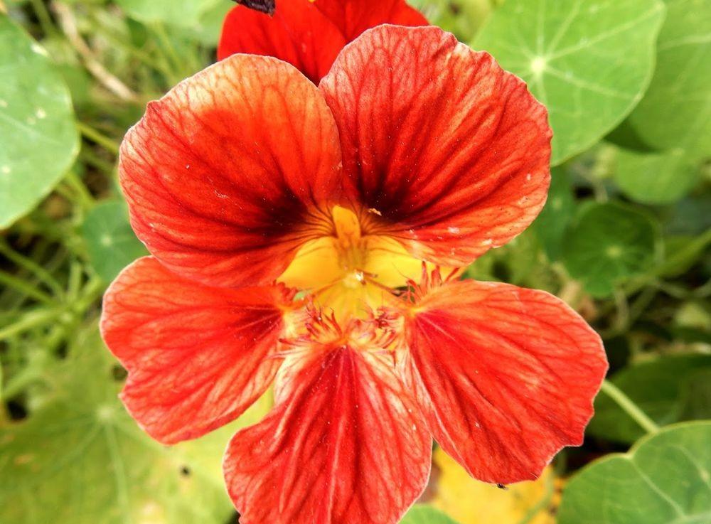 花卉日记---31_图1-13