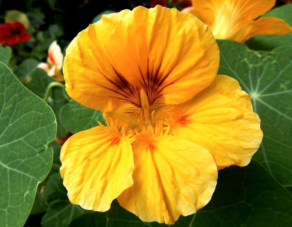 花卉日记---31_图1-14