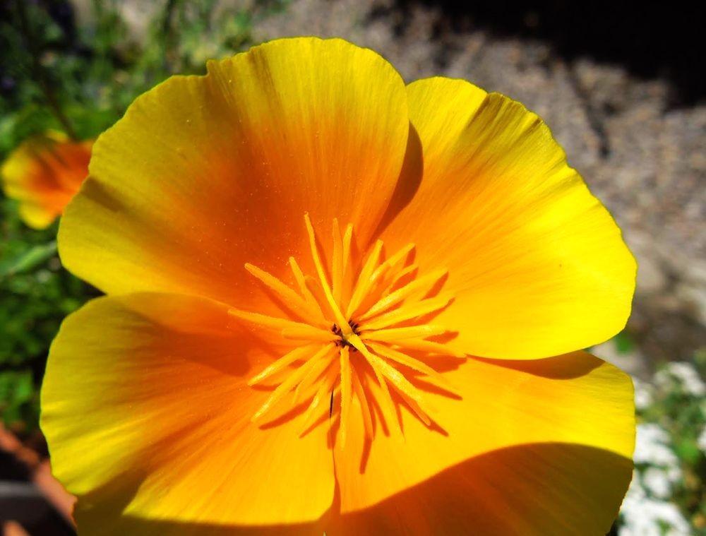 花卉日记---31_图1-15