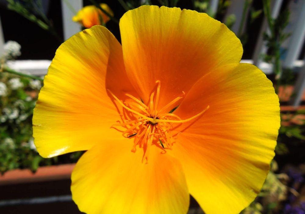 花卉日记---31_图1-17