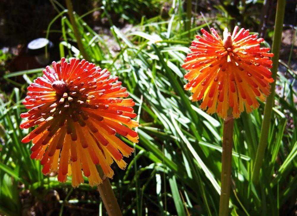 花卉日记---31_图1-19