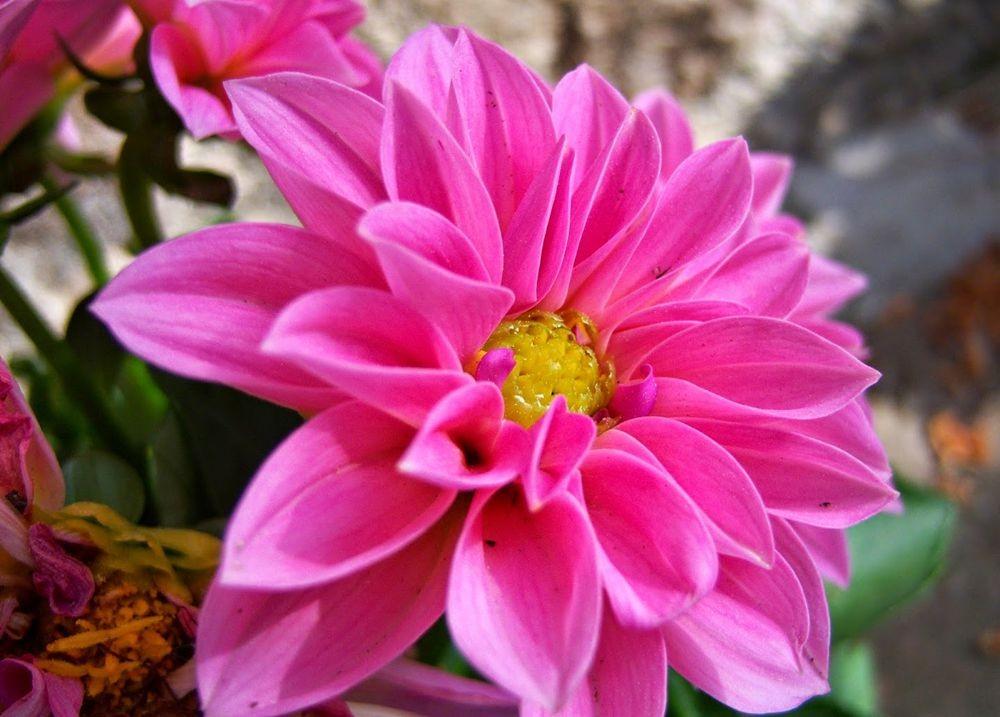 花卉日记---31_图1-20