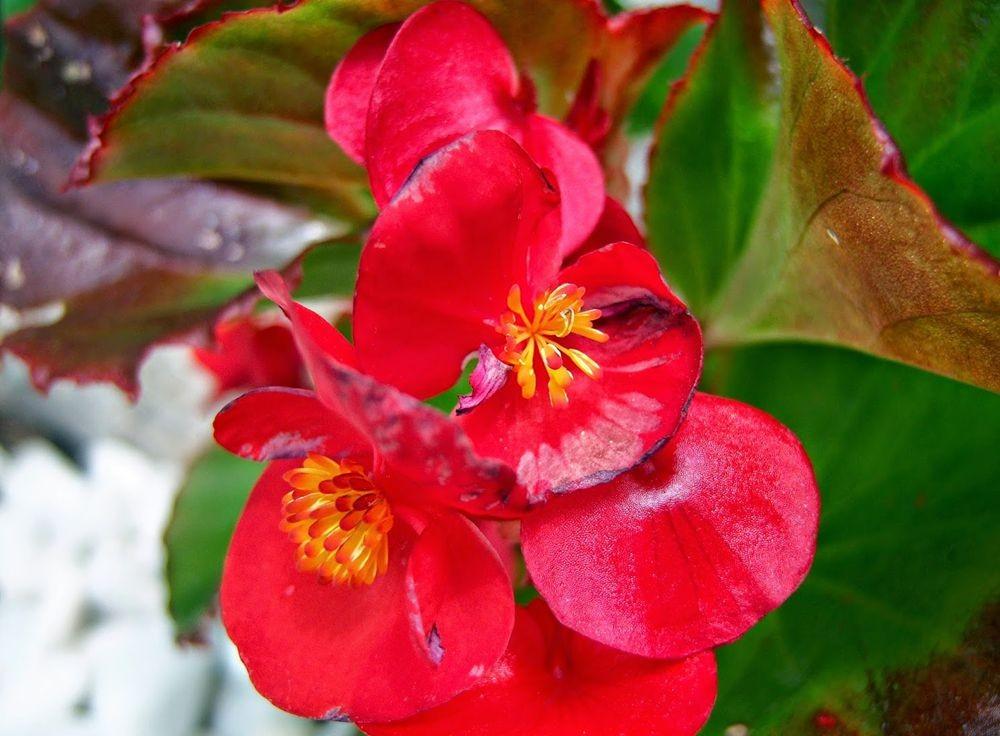 花卉日记---31_图1-21