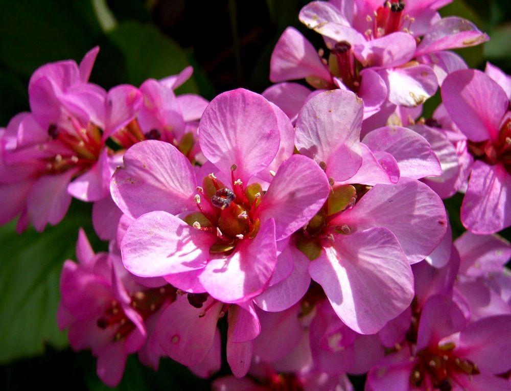 花卉日记---31_图1-22