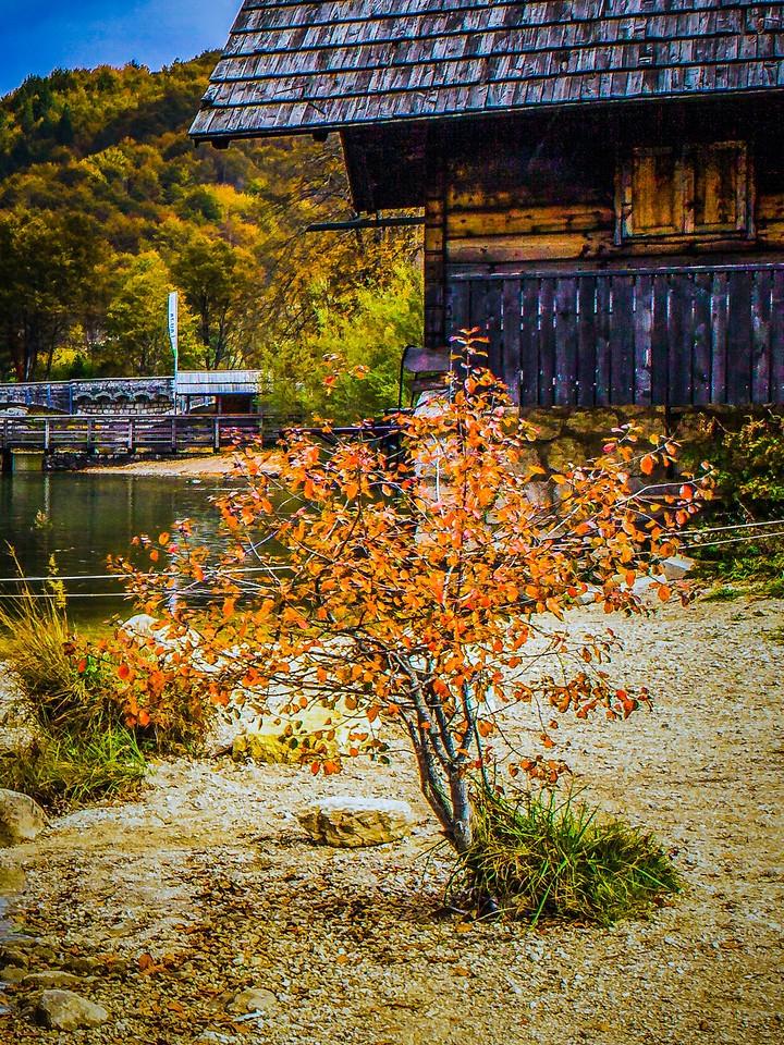 斯洛文尼亚博希尼湖(Lake Bohinj),秋色浓浓_图1-5