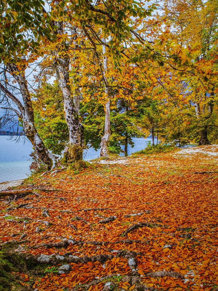 斯洛文尼亚博希尼湖(Lake Bohinj),秋色浓浓_图1-14