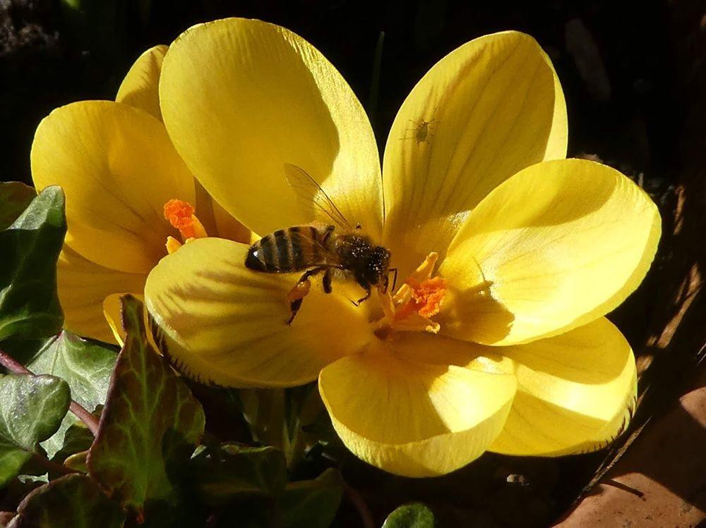 花卉日记---33_图1-1