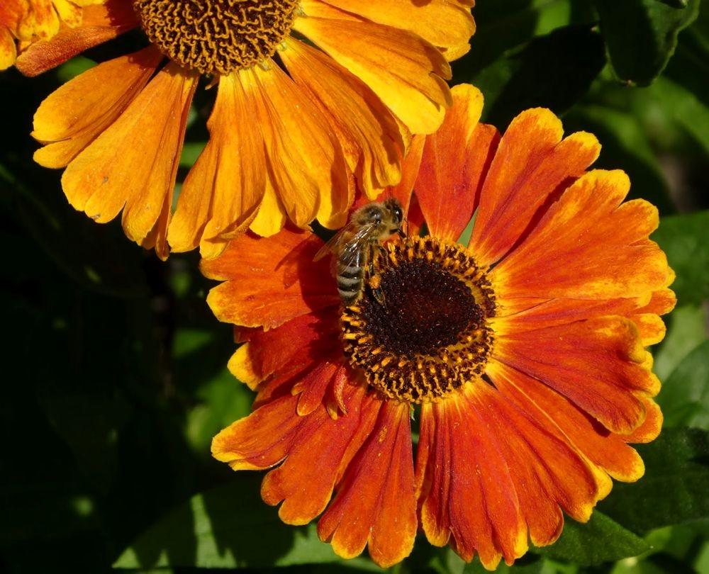 花卉日记---33_图1-2