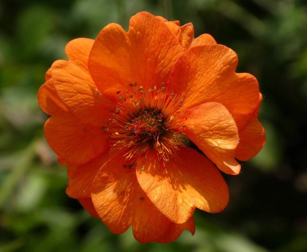 花卉日记---33_图1-4