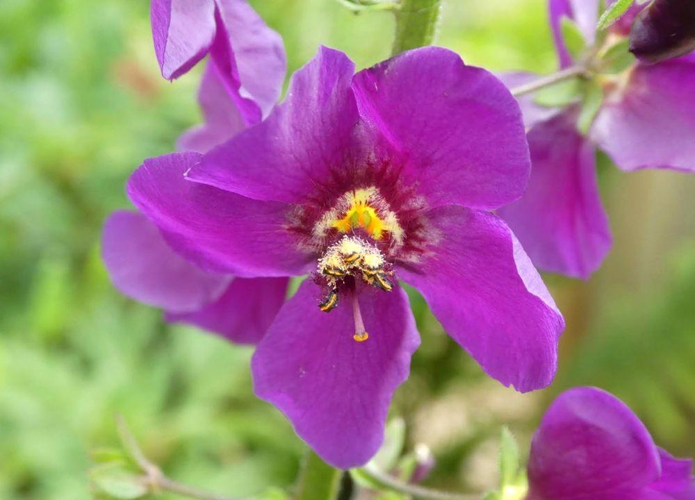 花卉日记---33_图1-5