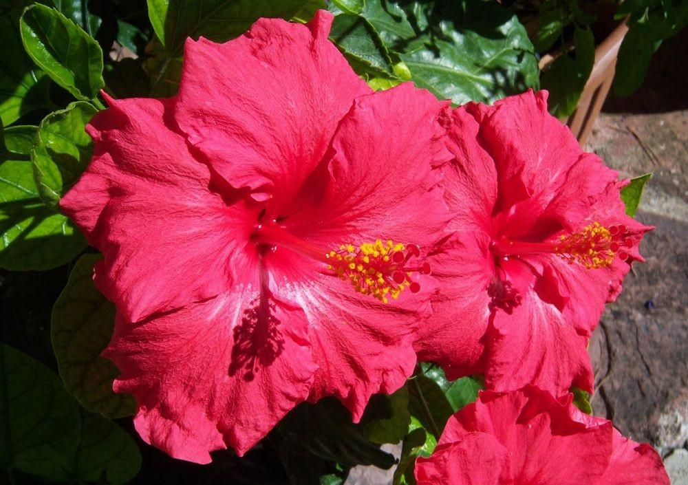 花卉日记---33_图1-6
