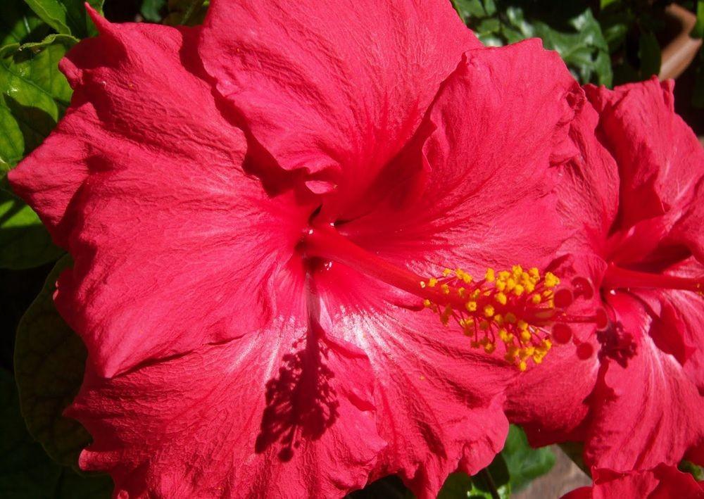 花卉日记---33_图1-7