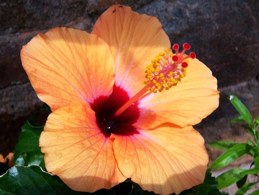 花卉日记---33_图1-10