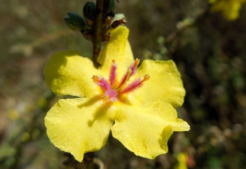 花卉日记---33_图1-15