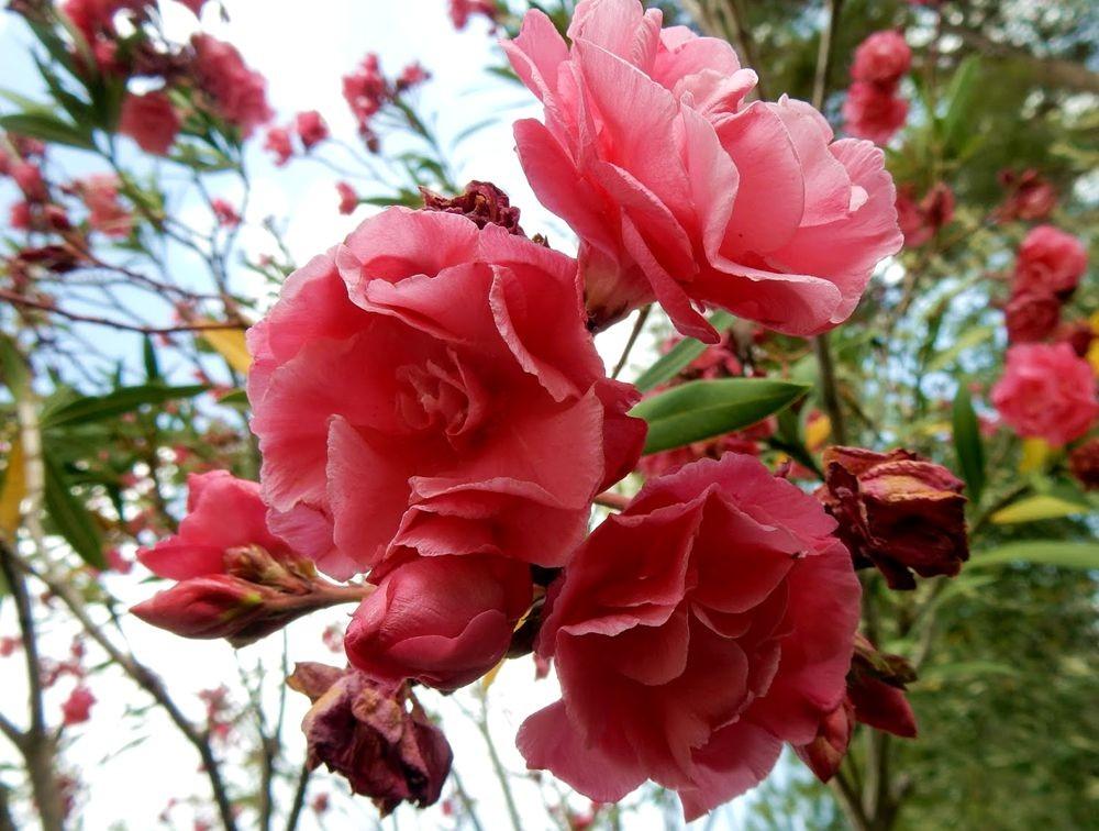 花卉日记---33_图1-16