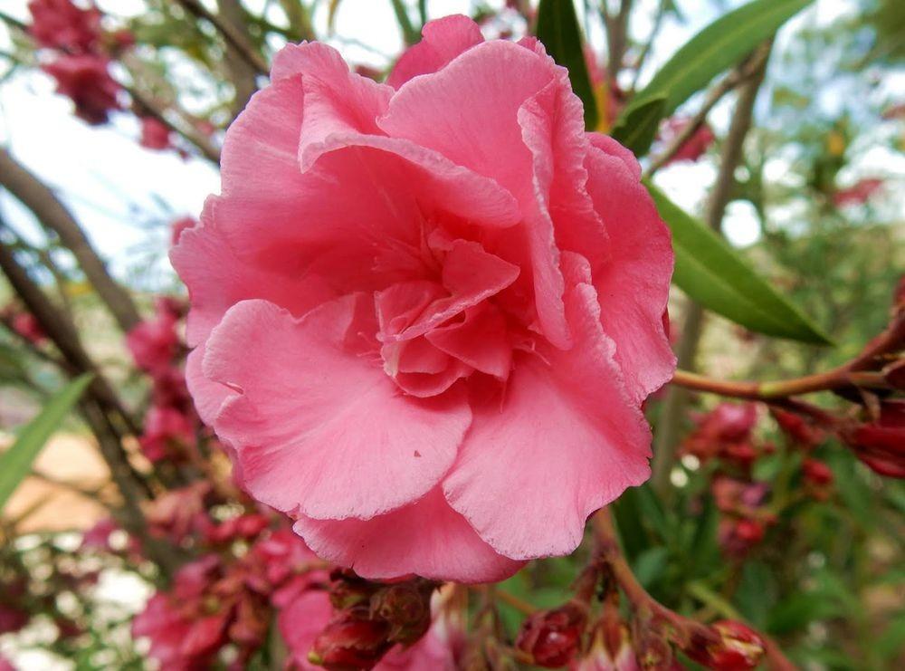 花卉日记---33_图1-17
