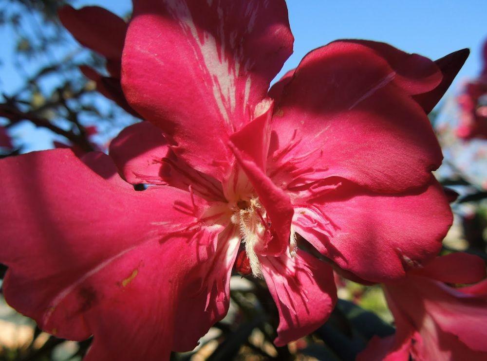 花卉日记---33_图1-18